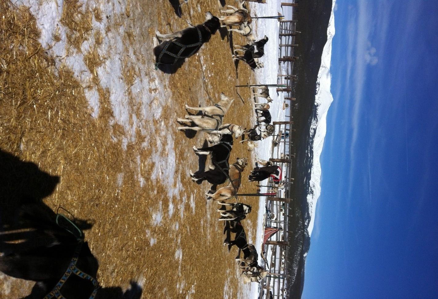 Dogsledding at the base of Mt. Massive