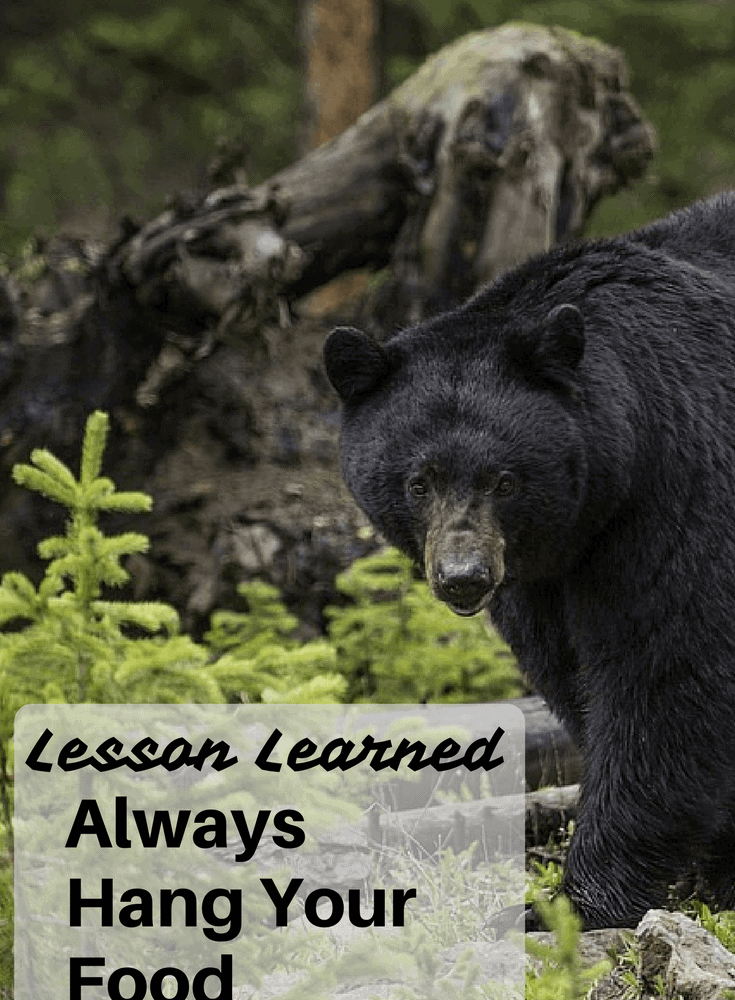 My Personal Experience With A Bear On The Appalachian Trail