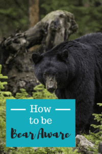 What if a bear attacks?