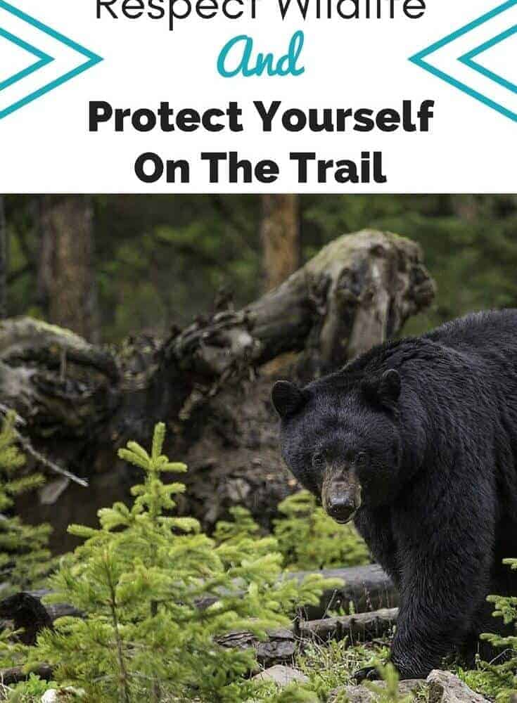 How To Protect Wildlife – And Yourself