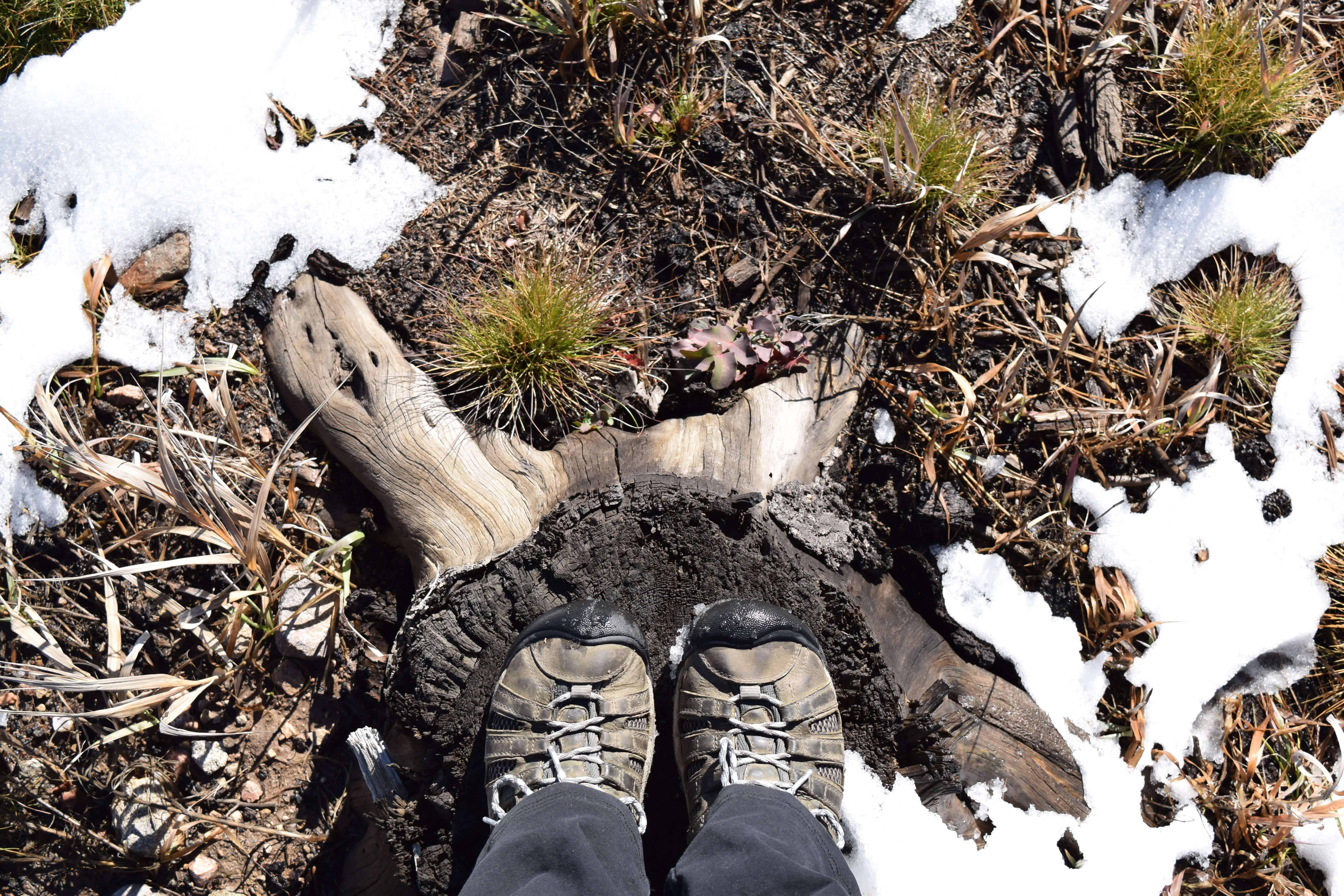 hiking boots on a stump
