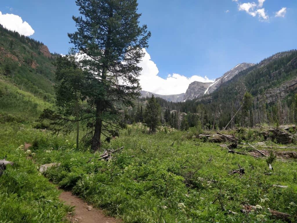 meadow on the way to cascade falls in granby, colorado