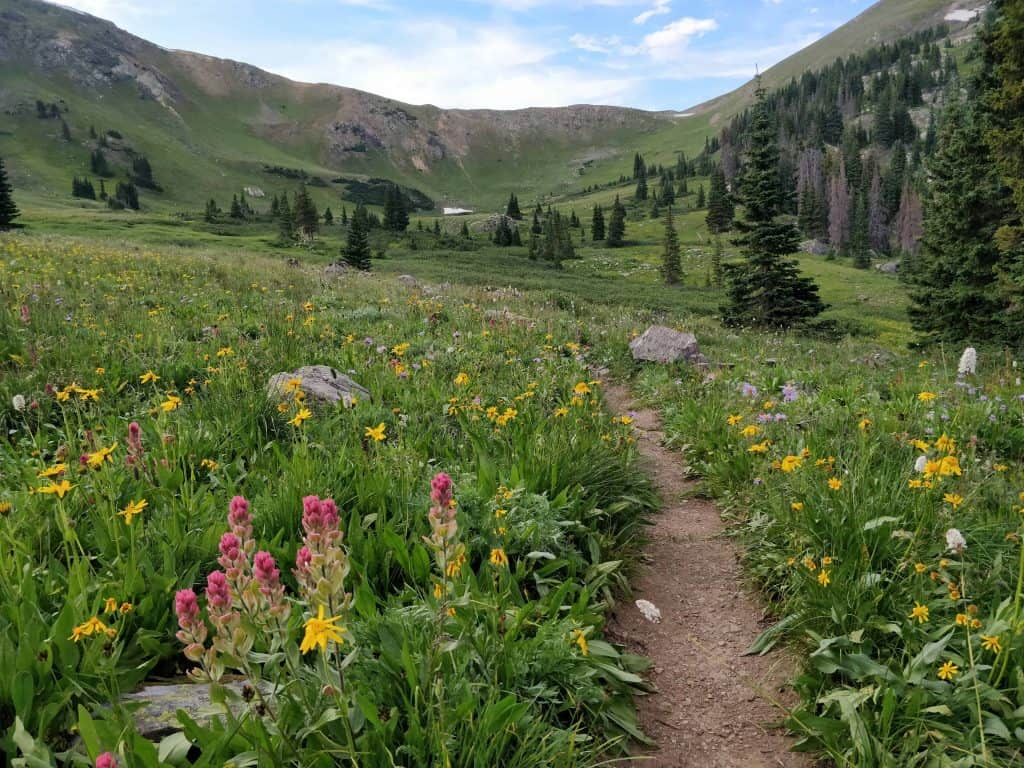 hiking trail in colorado with wildflowers
