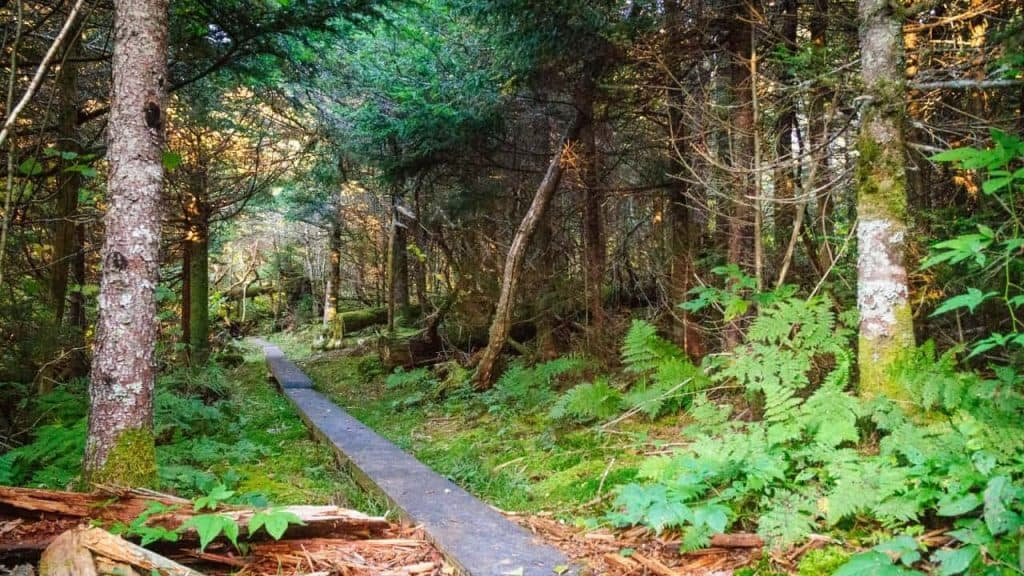 best hiking trails in the smokies