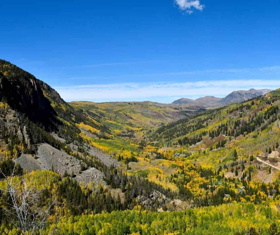 Aspen leaves starting to turn color in the Uncompahgre National Forest Colorado